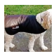 Cool Coats ideal for all breeds