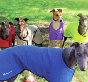 Cool Coat greyhound style