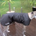 Greyhound Style Oilskin Dog Jacket