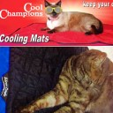 Cat Cooling Pads
