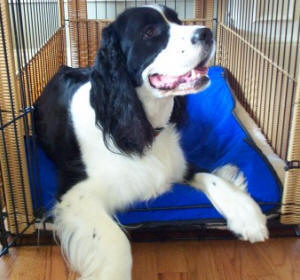 Cooling Mats for Dogs and Cats