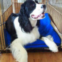 Dogs love their Cooling Mats | CoolChampions Brand