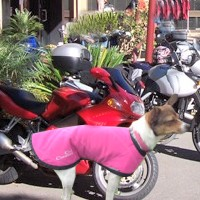 Cool Coat for dogs that love to ride...